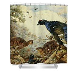 Blackgame Or Black Grouse Shower Curtain by Archibald Thorburn