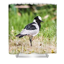 Blacksmith Lapwing Shower Curtain by Dave Whited