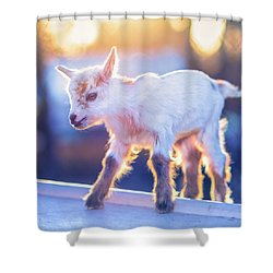 Little Baby Goat Sunset Shower Curtain by TC Morgan