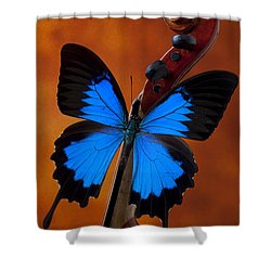 Blue Butterfly On Violin Shower Curtain by Garry Gay