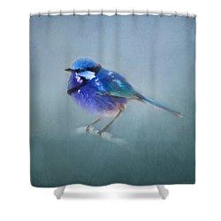 Blue Fairy Wren Shower Curtain by Michelle Wrighton