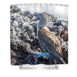Blue Footed Booby Shower Curtain by Jess Kraft