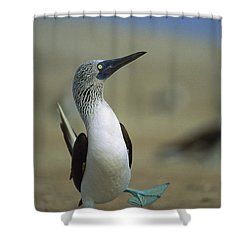 Blue-footed Booby Sula Nebouxii Shower Curtain by Tui De Roy