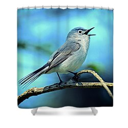 Shower Curtain featuring the photograph Blue-gray Gnatcatcher by Rodney Campbell