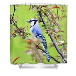 Blue Jay Shower Curtain by Deborah Benoit