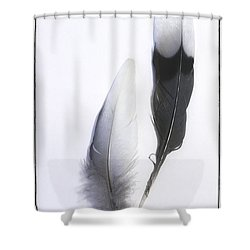 Blue Jay Feathers Shower Curtain by Cindi Ressler