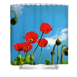 Blue Sky And Poppies Shower Curtain by Tamyra Ayles