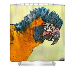 Blue Throated Macaw Shower Curtain by Jamie Pham