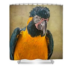 Blue Throated Macaw Portrait Shower Curtain by Jamie Pham