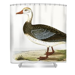Blue Winged Goose Shower Curtain by English School