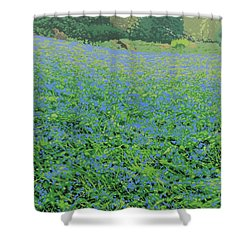 Bluebell Hill Shower Curtain by Malcolm Warrilow