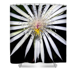 Bold Cactus Flower Shower Curtain by Kelley King