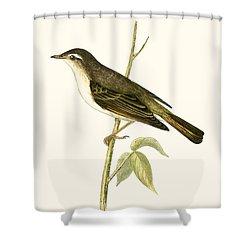 Bonelli's Warbler Shower Curtain by English School