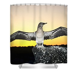 Booby At Sunset Shower Curtain by Dave Fleetham - Printscapes