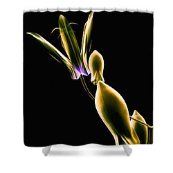 Botanical Study 1 Shower Curtain by Brian Drake - Printscapes
