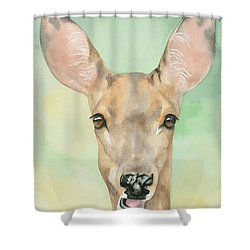 Bound For Glory Shower Curtain by Kimberly Lavelle