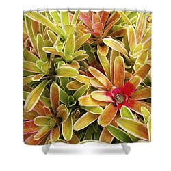 Bromeliad Brightness Shower Curtain by Ron Dahlquist - Printscapes