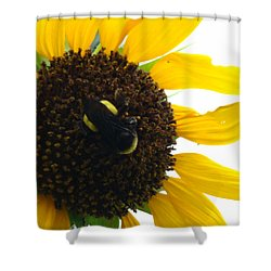 Brunch Shower Curtain by Terry Anderson