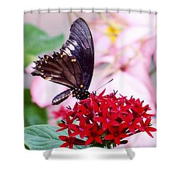 Black Butterfly On Red Flower Shower Curtain by Sandy Taylor