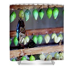 Butterfly With Butterfly Chrysalis 1 Shower Curtain by Andee Design