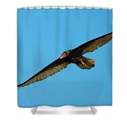 Buzzard Circling Shower Curtain by Mike Dawson