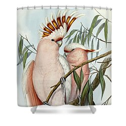 Cacatua Leadbeateri Shower Curtain by John Gould