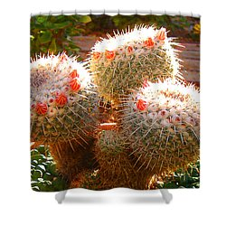 Cactus Buds Shower Curtain by Amy Vangsgard