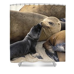 California Sea Lion And Newborn Pup San Shower Curtain by Suzi Eszterhas