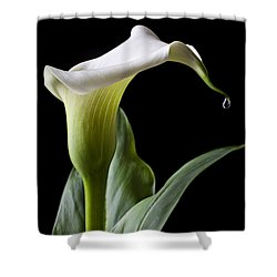 Calla Lily With Drip Shower Curtain by Garry Gay