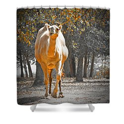 Camel Shower Curtain by Douglas Barnard