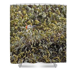 Camouflaged Red-bellied Woodpecker Shower Curtain by Carolyn Marshall