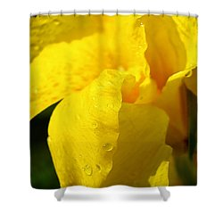 Canna At Sunrise Shower Curtain by Todd A Blanchard