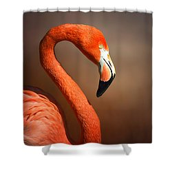 Caribean Flamingo Portrait Shower Curtain by Johan Swanepoel