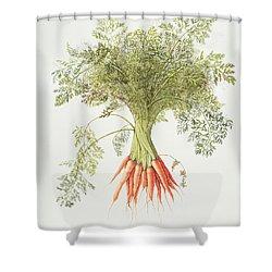 Carrots Shower Curtain by Margaret Ann Eden