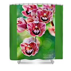 Cascading Miniature Orchids Shower Curtain by Kaye Menner