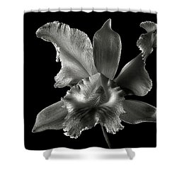 Catalea Orchid In Black And White Shower Curtain by Endre Balogh