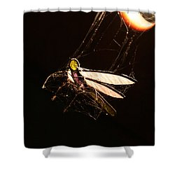Caught Prey Shower Curtain by Jorgo Photography - Wall Art Gallery