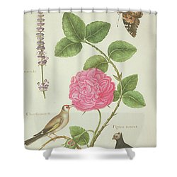 Centifolia Rose, Lavender, Tortoiseshell Butterfly, Goldfinch And Crested Pigeon Shower Curtain by Nicolas Robert
