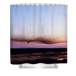 Chaos In Motion - Bird Of Many Birds Shower Curtain by Roeselien Raimond