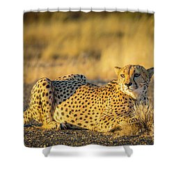 Cheetah Portrait Shower Curtain by Inge Johnsson