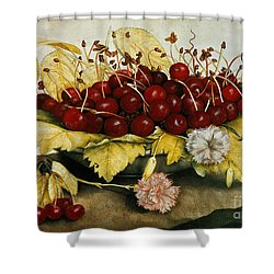 Cherries And Carnations Shower Curtain by Giovanna Garzoni
