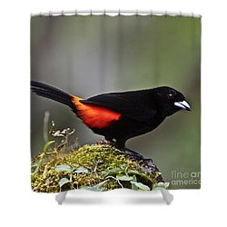Cherrie's Tanager Shower Curtain by Heiko Koehrer-Wagner
