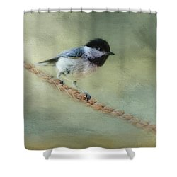 Chickadee At The Shore Shower Curtain by Jai Johnson