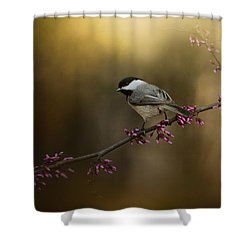 Chickadee In The Golden Light Shower Curtain by Jai Johnson