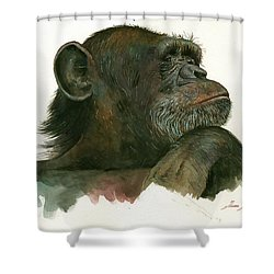 Chimp Portrait Shower Curtain by Juan Bosco