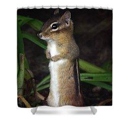Chipmunk On Alert Shower Curtain by Karol Livote