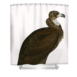Cinereous Vulture Shower Curtain by English School