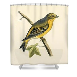 Citril Finch Shower Curtain by English School