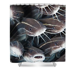 Close-up View Of A Group Of Catfish Shower Curtain by Beverly Factor