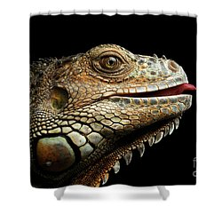 Close-upgreen Iguana Isolated On Black Background Shower Curtain by Sergey Taran